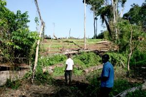 Die großflächige Abholzung des Regenwaldes droht die letzten frei lebenden Menschenaffen auszurotten