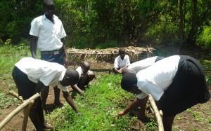 Schüler säen Pflanzensamen