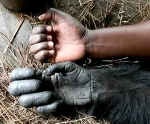 Schimpansen Workshop