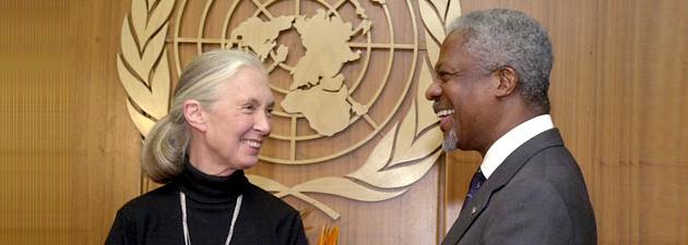 Jane Goodall als UN-Friedensbotschafterin