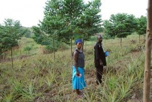 Farmerprojekt Hoima