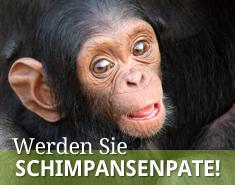 slider-schimpansenpatenschaft