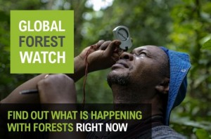 Global Forest Watch Launch