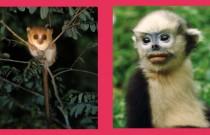 Primaten in Gefahr IUCN