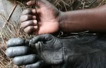 Schimpansen-Workshop