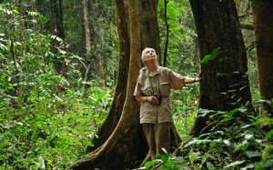 Jane Goodall in Gombe
