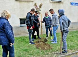 Polytechnischen Schule Deutschfeistritz, Stmk.