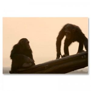 Abendstimmung in der Schimpansenstation Tchimpounga