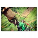 Kartoffelernte bei den Batwa Pygmäen