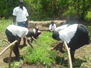 Bäume pflanzen in Uganda